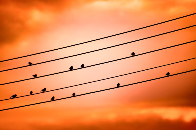 birds-on-a-wire-3670268_1920